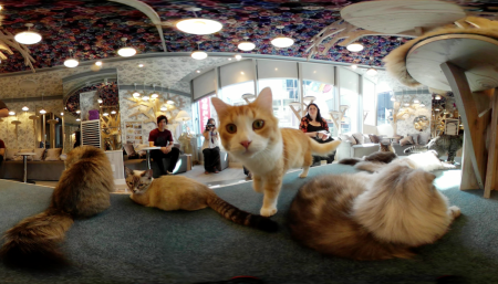 Cat cafe 360 photo